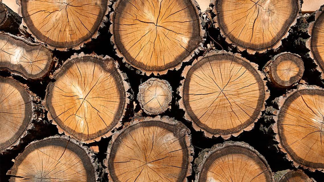 Este-Pais_Hacia-una-regulación-forestal-conservacionista